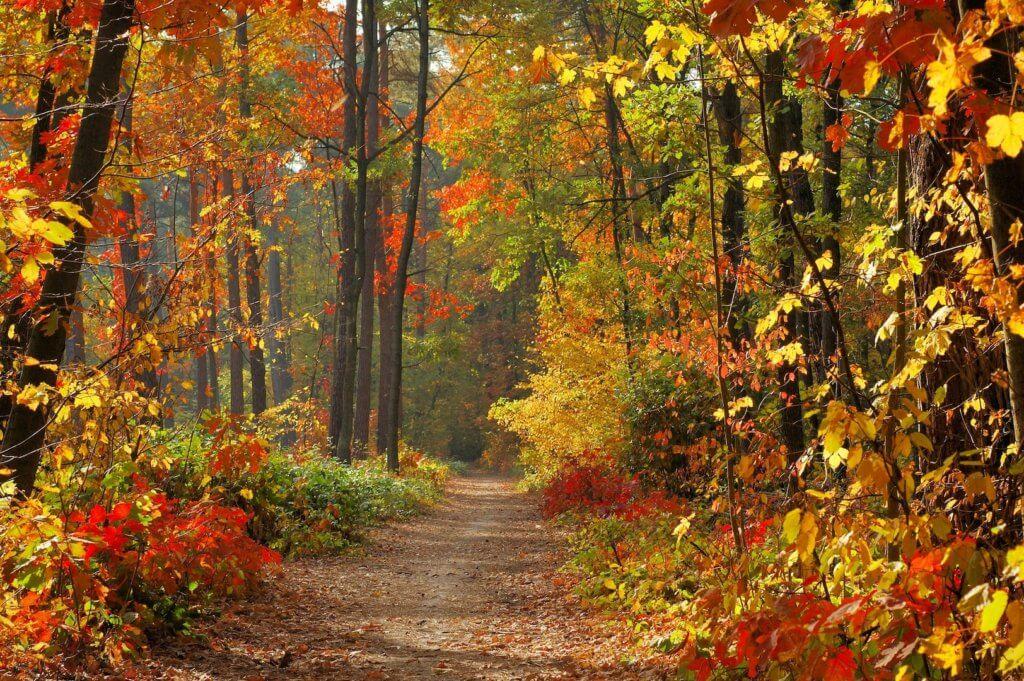 8 dingen die je deze herfst zou moeten doen naar buiten