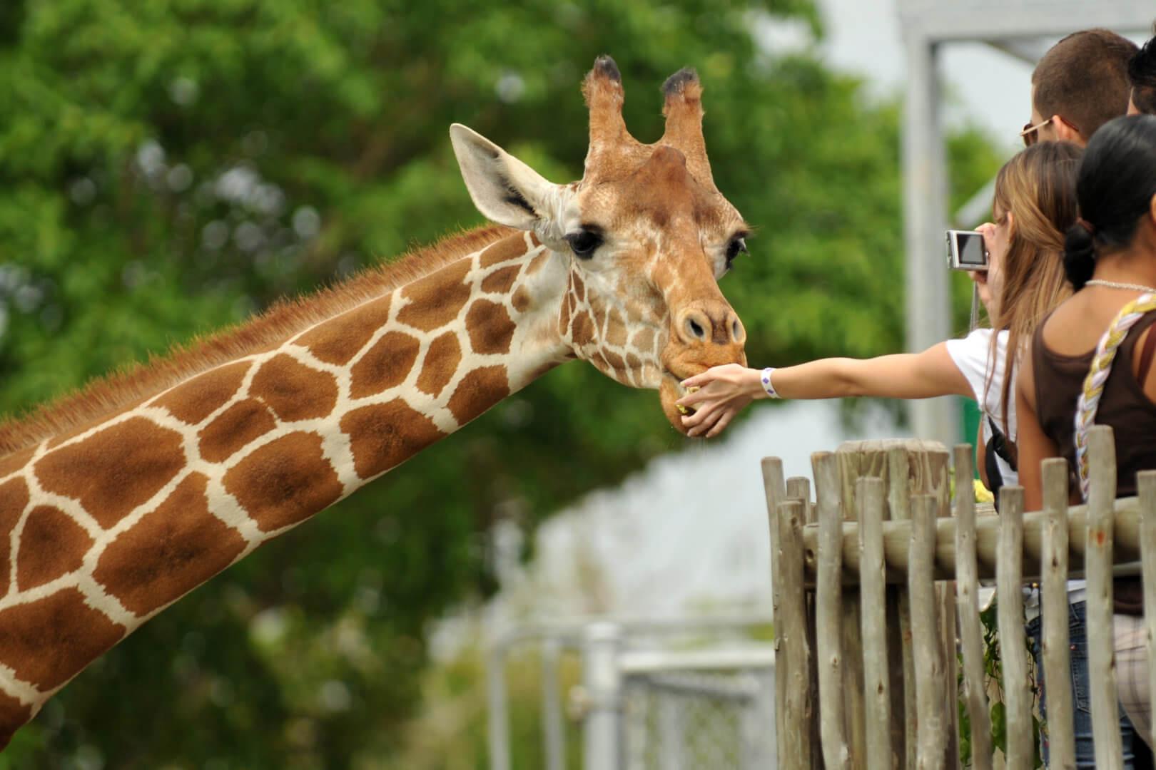 leuke uitjes in de meivakantie bezoek een dierenpark