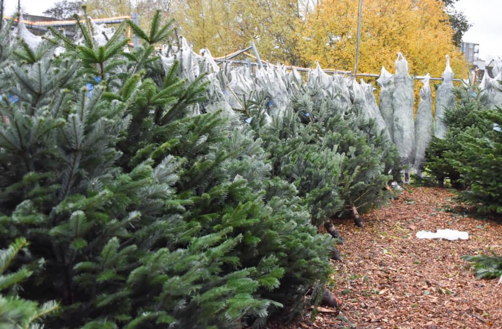 tips waardoor jij nog langer van je kerstboom kan genieten mooie kerstbomen